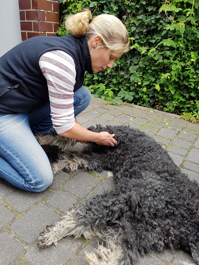 Chiropraktik Hund