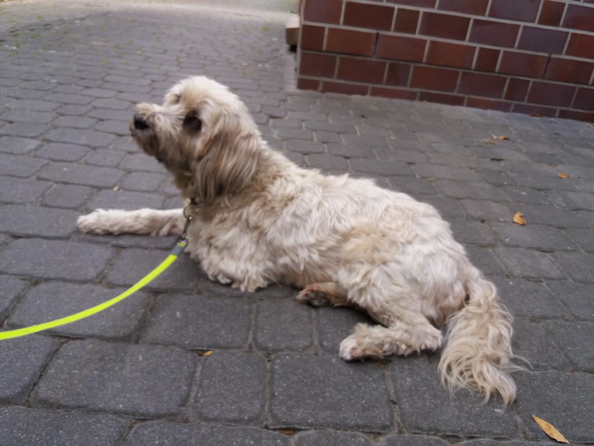 Hund liegt entspannt mit Akupunkturnadeln im Hof