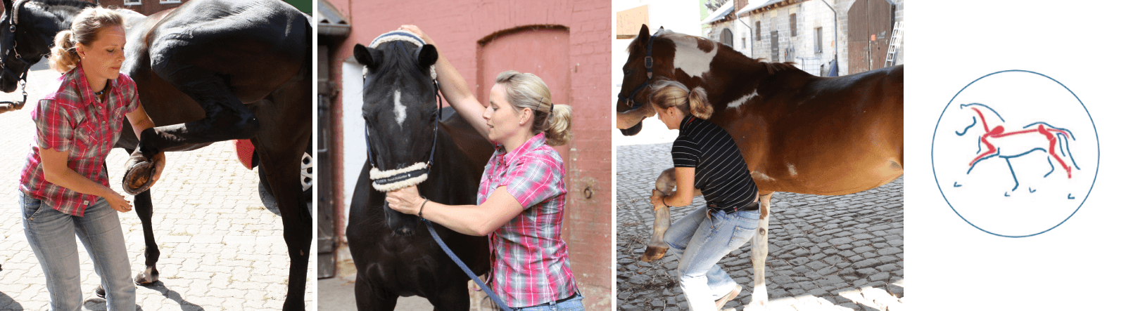Osteopathie - osteopathische Behandlungen an Pferden und Hunden